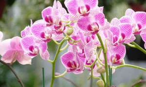 Orchids -- in the pink!